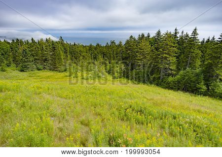 Vibrant Green Field With Wildflowers And Pine Forest Beneath A Fog Cloud Sky, Blue Ocean