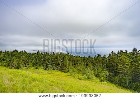 Vibrant Green Hillside And Pine Forest With Thick Fog And Low Cloud Skyscape