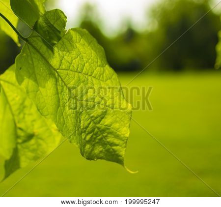 Beautiful close up of a leaf with some sunlight shining over it