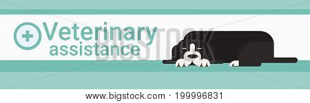 Veterinary Assistance Clinic For Animals Pets Vet Service Banner Vector Illustration