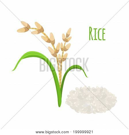Rice plant, vegetarian food. Green harvest, oryza wheat. Raw rice seeds. Made in cartoon flat style. Vector illustration