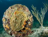 Coral growth on old consturction debris on a reef. poster