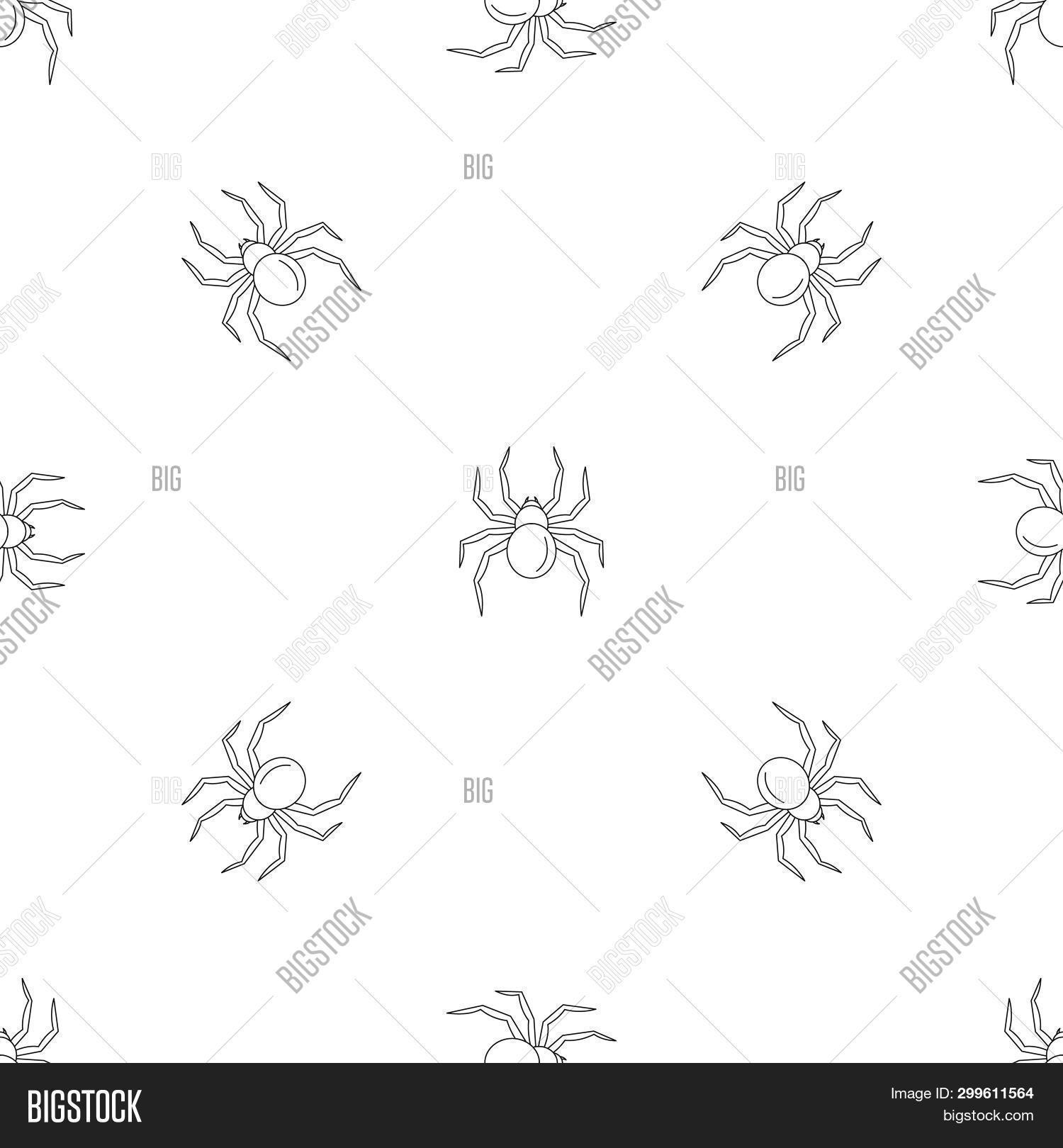 Black Widow Spider Image Photo Free Trial Bigstock
