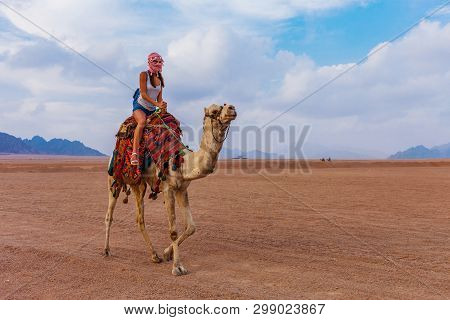 Tourist Woman In Traditional Arabian Clothes With Camel In The Sinai Desert, Sharm El Sheikh, Sinai