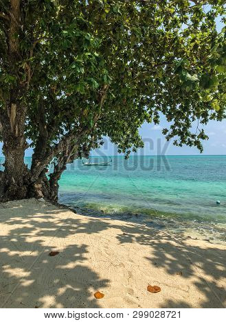 Tree On The Beach With Boats In The Sea