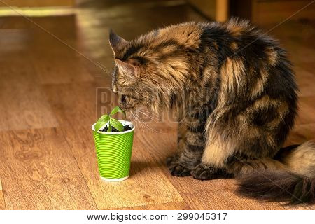 Beautiful home cat sniffs a flower in a green paper cup standing on the floor of the room poster