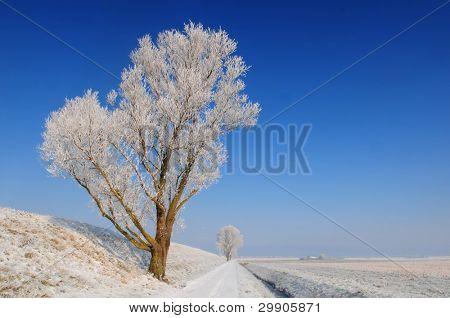 Fairytale winter landscape in Holland