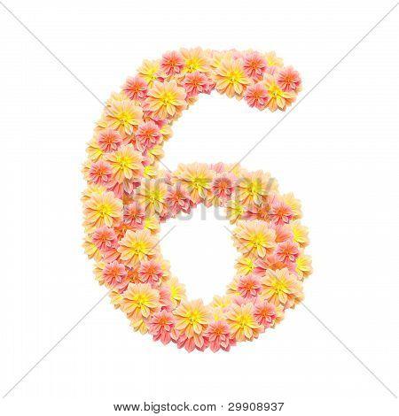 6,flower Alphabet Isolated On White