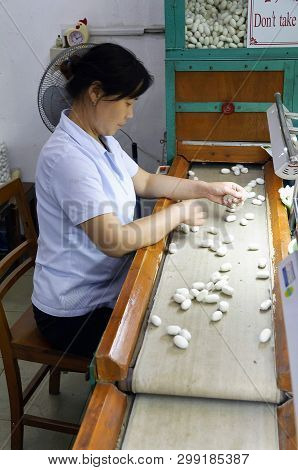 Suzhou, China - August 12, 2011: View Of A Cocoons Selector In The Suzhou No.1 Silk Mill Factory. Si