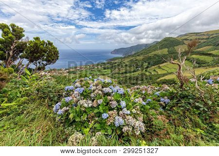 Beautiful View Of Hydrangeas And Coastline Above Ponta Delgada On The Island Of Flores In The Azores