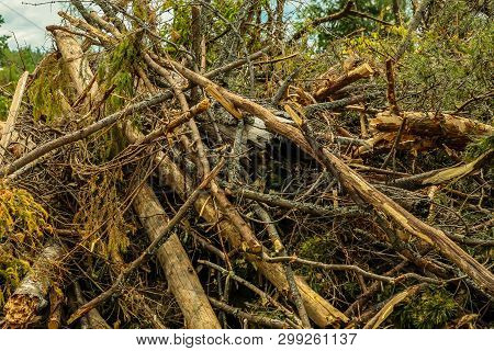 Blockage Dry Branches Ate Broken Clearing Clearing Forest Hurricane Background Forestry