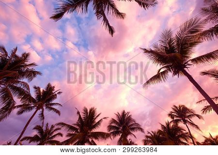 Silhouette Of Tropical Beach During Sunset Twilight. Seascape Of Summer Beach And Palm Tree At Sunse