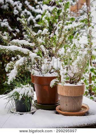 Unexpected snow in spring threatens plants in the garden poster