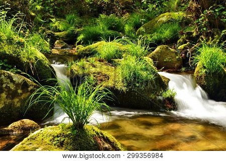 Spring; Mountain Brook , Stream With Water Movement
