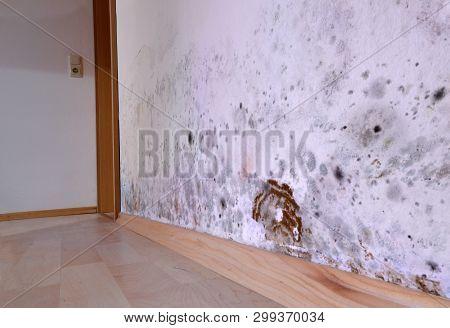 Mold, Wall, Brown Cellar Sponge, Damage, Dirty