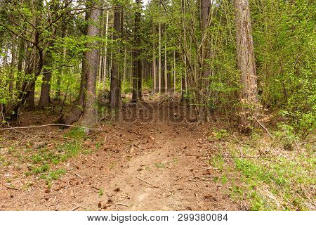 Off Road In The Forest. Mountain Landscape