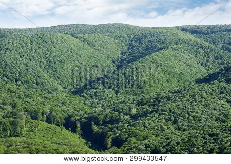 Landscape Of Beautiful Green Lush Foliage, Greenery Or Forest On Hill.