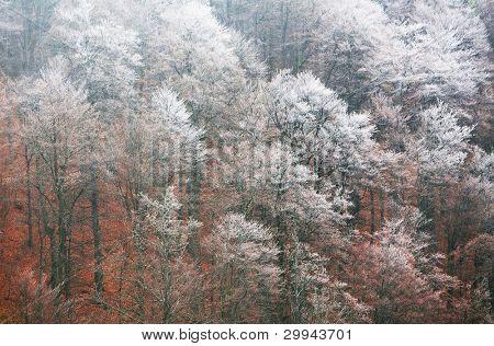 Frozen Forest in Cozia National Park, Romania