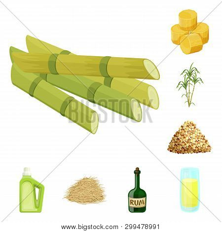 Vector Illustration Of Sugarcane And Cane Logo. Collection Of Sugarcane And Field Vector Icon For St