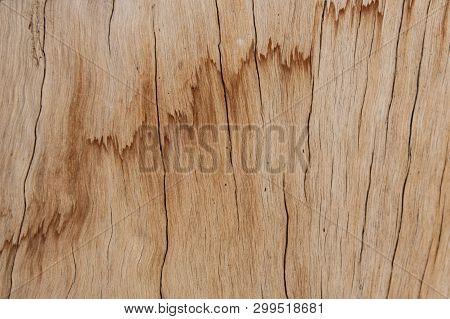 Woodgrain Closeup, Light Wood Log With Interesting Grain Pattern, Horizontal Aspect