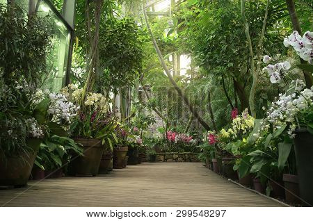 Boardwalk In Orangery. Exotic Plant Collection. Winter Garden. Moscow State University Botanical Gar