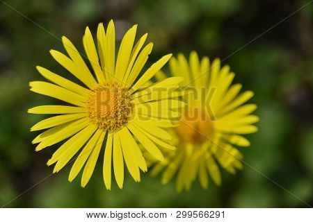 Spring; Yellow Flowers, Beauty , Colors And Flares