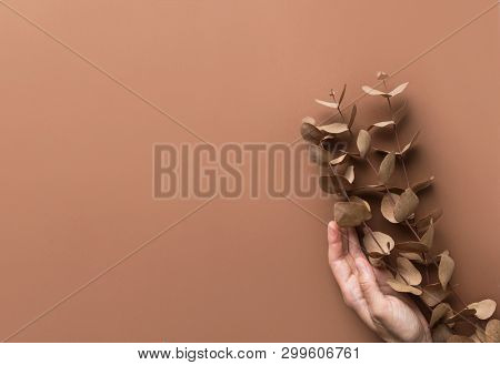 Elegant Beautiful Hand Of Young Caucasian Woman Holds Branches Twigs Of Dry Silver Dollar Eucalyptus