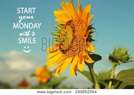 Inspirational Monday Quote- Start Your Monday With A Smile. With Beautiful Sunflowers And  Morning L