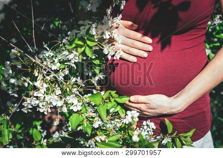 Young  5 Months Pregnant Woman In Red T-shirt Put Her Hands On A Bally Standing Under Cherry Tree. C