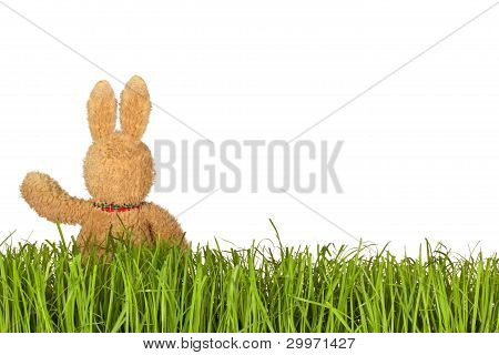 Green Grass And Bunny