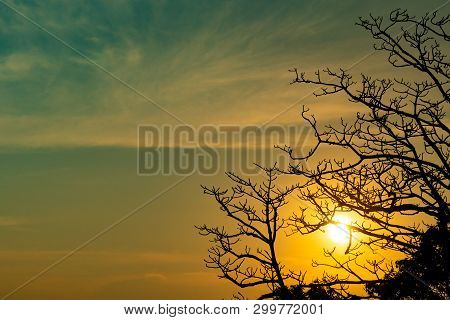 Silhouette Dead Tree On Beautiful Sunset Or Sunrise On Golden Sky. Background For Peaceful And Tranq