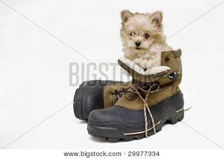 Puppy In a Boot