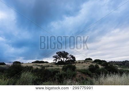 Dark morning clouds with lone oak on hilltop at Santa Susana State Historic Park in the San Fernando Valley area of Los Angeles, California.