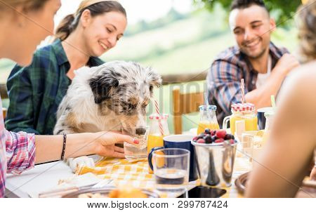 Young People At Healthy Pic Nic Breakfast With Cute Dog In Countryside Farm House - Happy Friends Mi