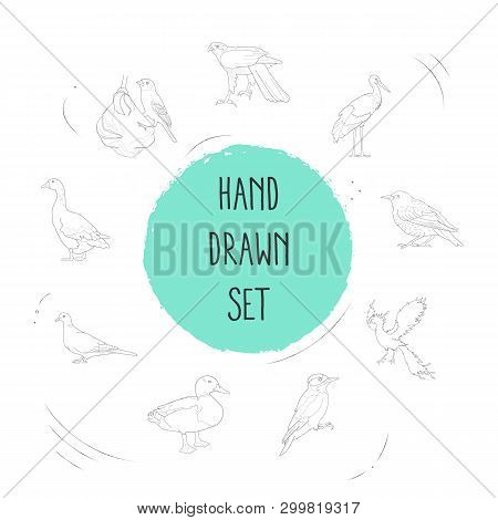 Set Of Birds Icons Line Style Symbols With Weaver Bird, Duck, Goose And Other Icons For Your Web Mob