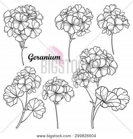 Vector Set With Outline Geranium Or Cranesbills Flower Bunch And Ornate Leaf In Black Isolated On Wh