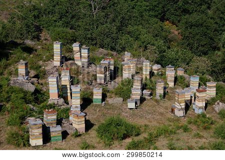 Bee Hives; Honey Factories In The Forest