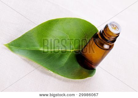 Aromatic oil with a green leaf close up