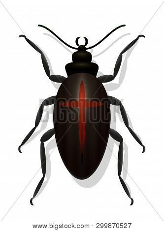 Black Bug With Cross. Black Widow Beetle. Symbolic For Dangerous, Toxic, Poisonous Insects Or For De