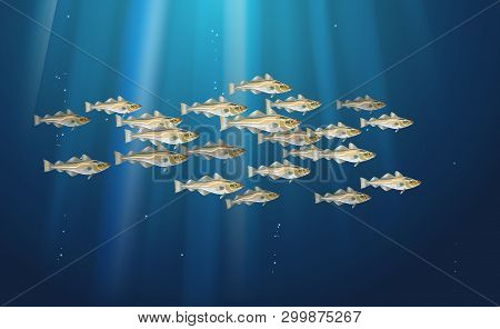 School Of Fish Codfish. Marine Life. Cod Atlantic, Vector Illustration With Details And Optimized Sp