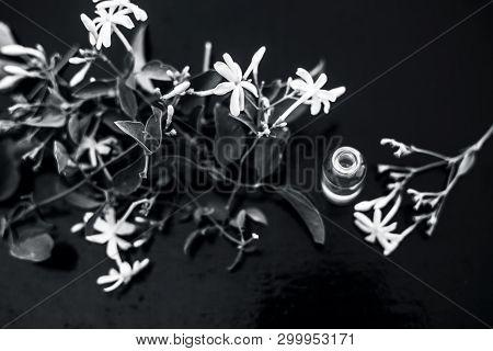 Close Up Of Essence Or Essential Oil Of Indian Jasmine Flower Or Juhi Or Jasminum Auriculatum Isolat