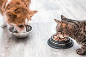 dog and a cat are eating together from a bowl of food. Concept cat and dog friendship t-shirt