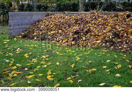 Cupressocyparis, Leylandii, Hedge, Narrow, Brick, Trimming, Garden, Park, Red, Cupressus, Macrocarpa