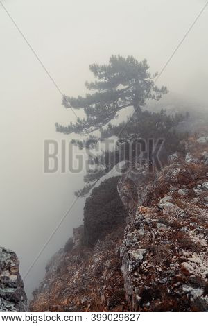 Alone Relict Pine Tree Grows On A Rock In The Fog In The Mountains. Blurred Focus In The Foreground