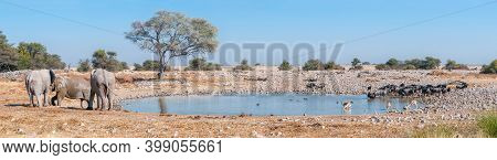 Panorama Of African Elephants, Blue Wildebeest And Springbok At The Okaukeujo Waterhole In Northern