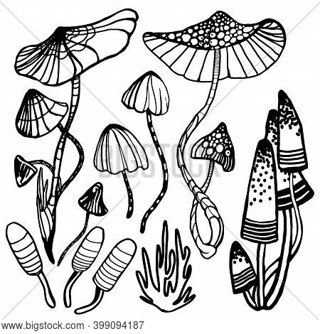 Set Of Varous Exotic And Magic Psychedelic Mushrooms. Coloring Page Hallucinogenic, Fantazy Mushroom