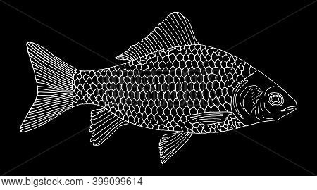 Crucian Carp Fish Hand Drawn, White Contour On Black Background. River Fish With Scale, Gills. Vecto
