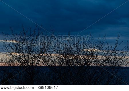 Silhouette Of Black Tree Branches Without Leaves In Background Of Dark Sky. Autumn Landscape. Dead T