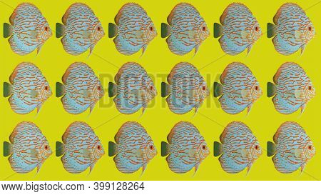 Fishy Trios On Yellow Background. 3d Rendered Red And Blue Fish.
