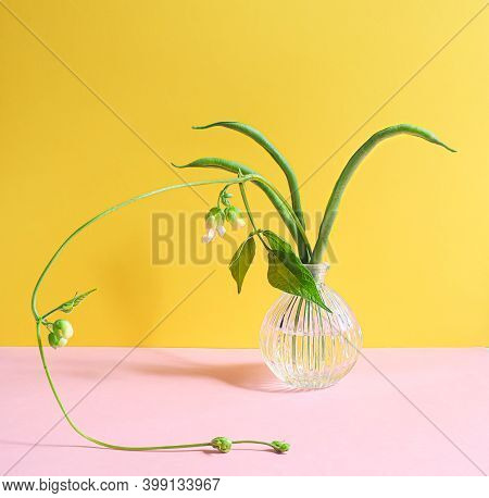 Creative Layout - Green Bean Pods And Green Bean Flowers In A Retro Glass On Yellow And Pink Backgro